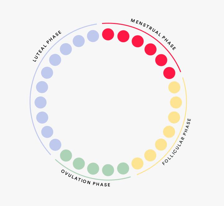 Diagram of menstrual cycle